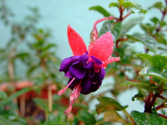 flor arete | Flickr - Photo Sharing! Sadik