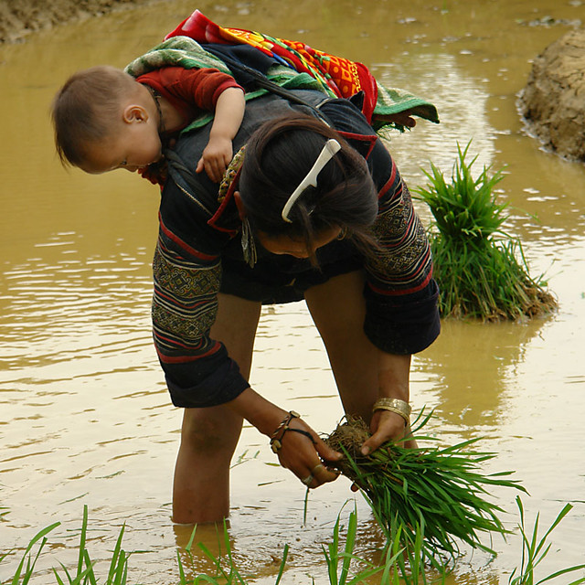 Black Hmong woman and baby, rice planting, Sapa Vietnam