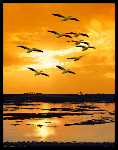 Golden Sun With Pelicans Tulsa Keystone Dam ©