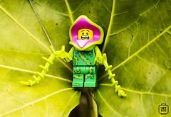 Plant Guy