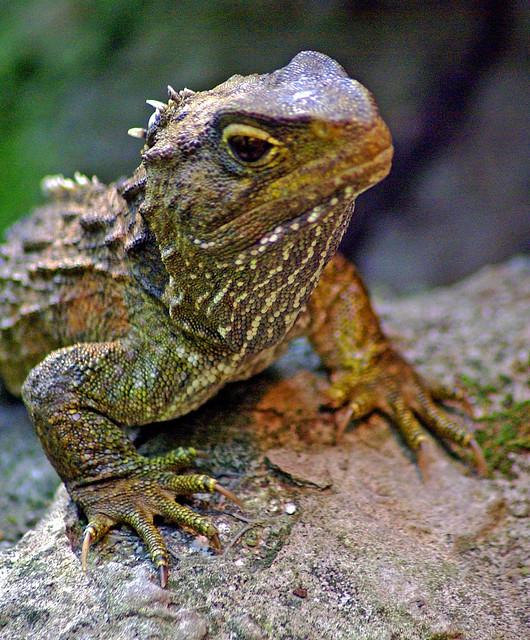 A 2 Z Reptiles Reptiles V - a ...