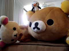 giant panda(0.0), teddy bear(1.0), textile(1.0), plush(1.0), stuffed toy(1.0), bear(1.0), toy(1.0),