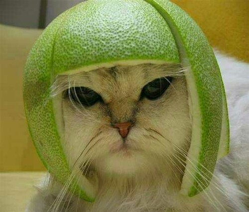 cat with lime hat.jpg