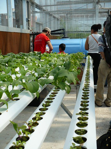 Indoor Hydroponic System Hydroponics Soil Less Gardening