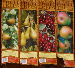 Lidl fruit trees