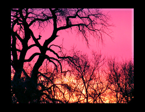 pink trees sunset orange newmexico albuquerque southvalley