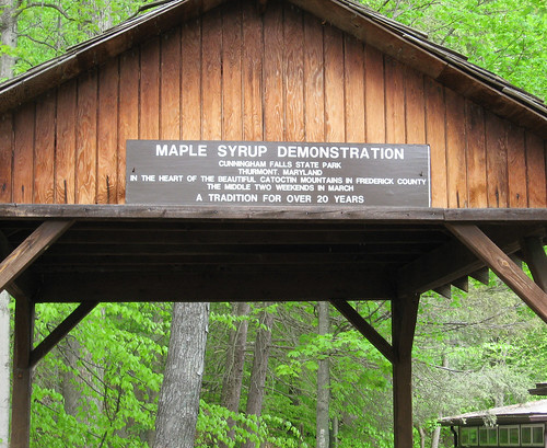 Mmmmm, maple syrup!