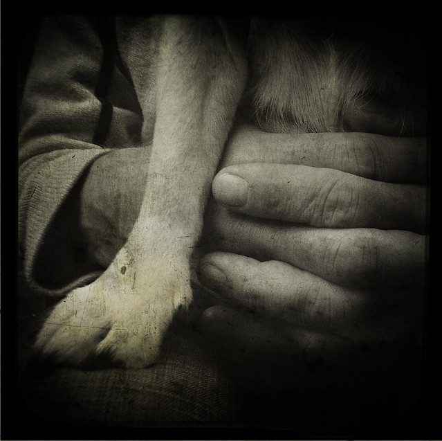 The Intimacy of Dog Paw and Human Hand