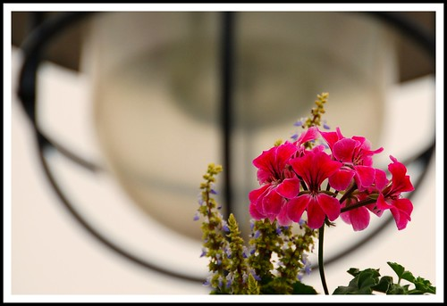 Flower and Lamp