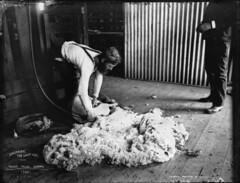 Shearing, the last cut