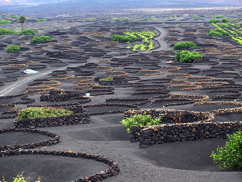 Vineyards, Lanzarote, Canary Islands