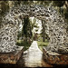 Jackson's Antler Arch