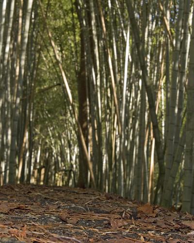 china green nature forest nikon panda alabama bamboo d200 prattville thebiggestgroup jsmoorman thenextbiggestgroup