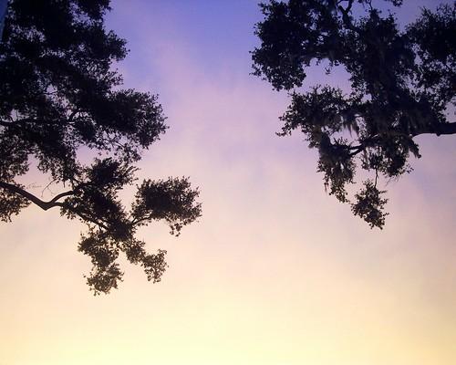 sunset sky florida brandon