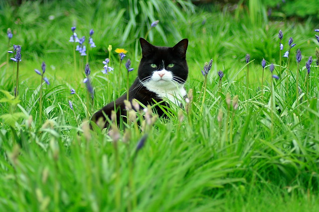 Cats in the Garden a gallery on Flickr