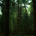 The death tree in the green forest by Tom_Holmes