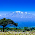 The Myton Hospices Kilimanjaro Trek