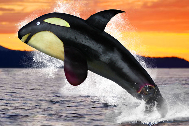 Eggplant Orca Whale (A product of