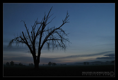 winter sunset oregon oak mcminnville