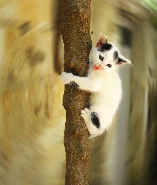 how do cats get mange