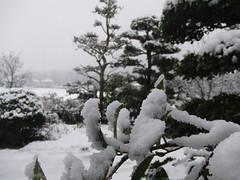 この冬初めてのまとまった降雪