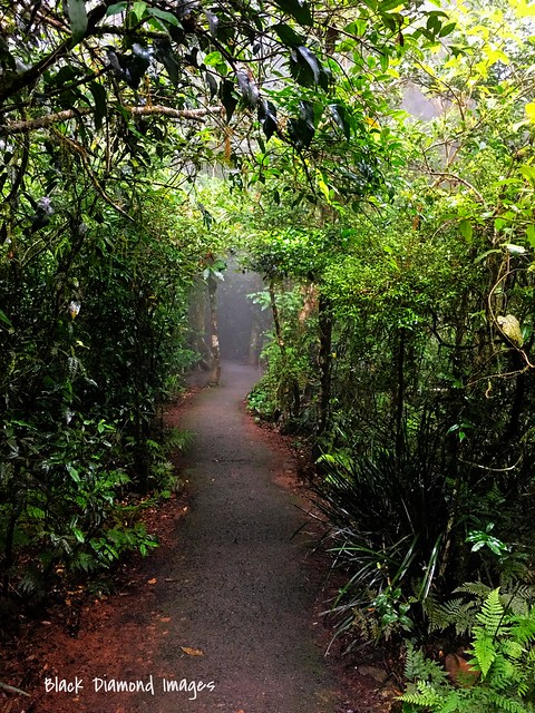 Rainforest Misty Track at Best of All Lookout - Springbrook National Park