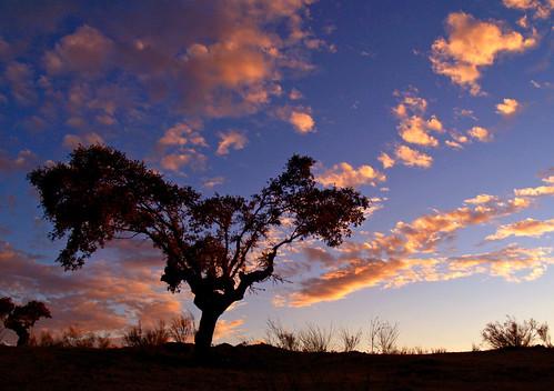 blue sunset red sky españa tree silhouette clouds sunrise landscape arbol atardecer spain rojo paisaje olympus cielo campo monroy extremadura caceres encina e500 naturesfinest twtme abigfave aplusphoto treesubject