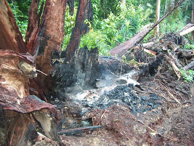 burning logged forest