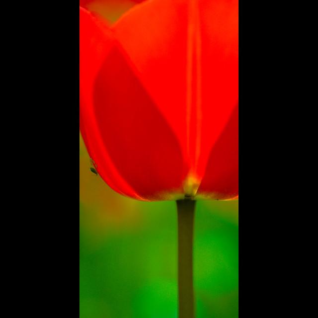 Verticals: Complementary colors