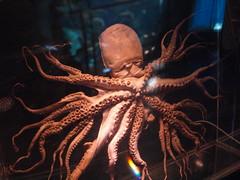 octopus(1.0), invertebrate(1.0), marine invertebrates(1.0),