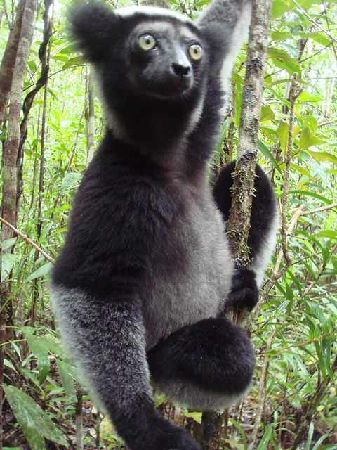 Is Madagascar Safe To Travel Alone