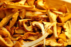 Cantharellus (Chanterelle) mushrooms sliced for toni…
