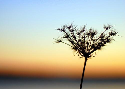 winter sunset sea flower fall nikon maine almostsooc nikond40