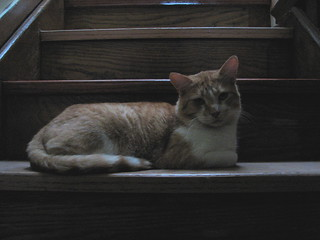 Jake on the stairs