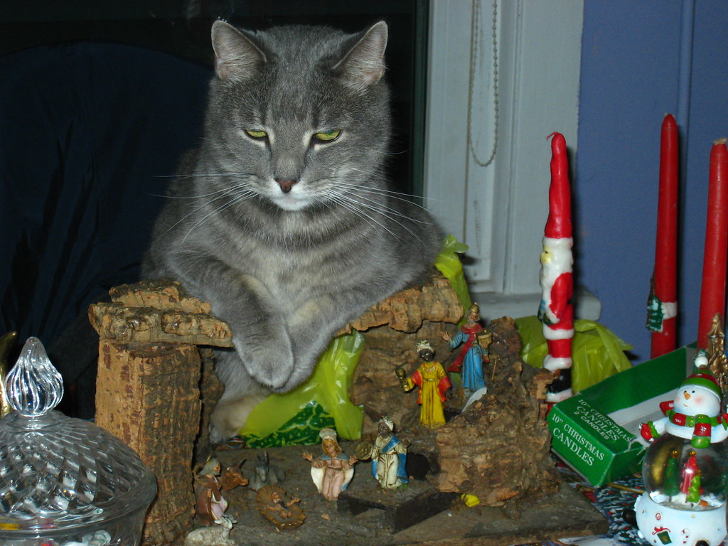 Yodi on the Christmas nativity scene
