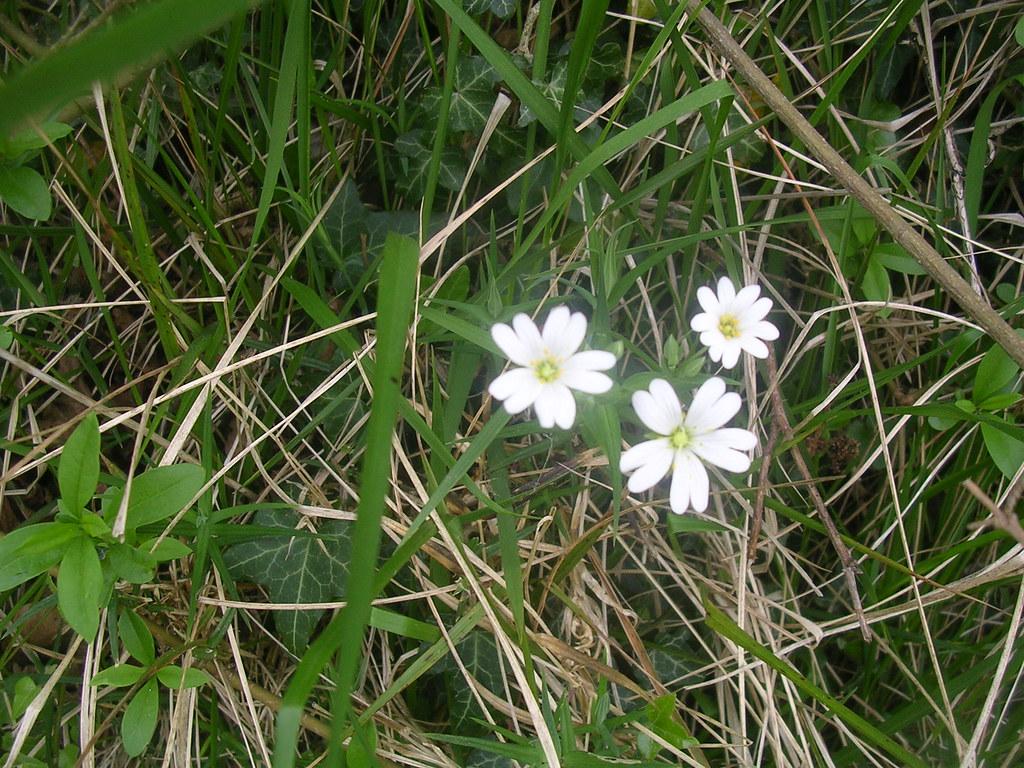 Stitchwort Wye Circular
