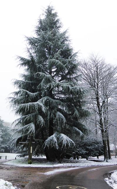 dusting of snow, Panasonic DMC-TZ40