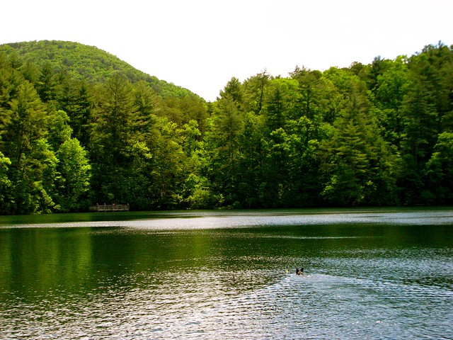 Unicoi state park flickr photo sharing for Trout fishing in helen ga
