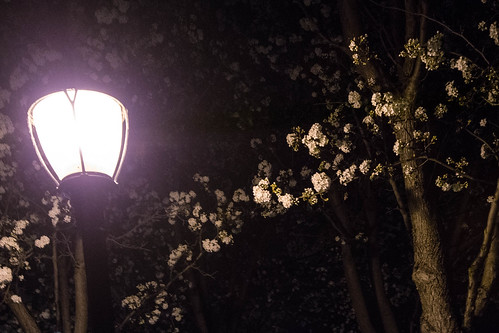Night in Los Altos