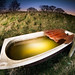 bath time by Steve Sharp