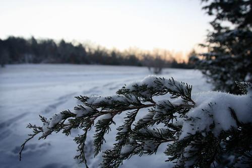 snow farm edited