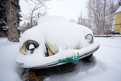 Photograph: Snow Bug