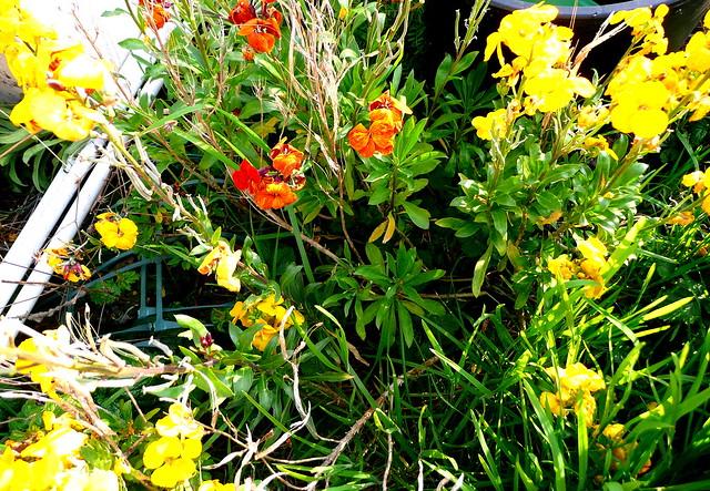 Photo - Bouquet de fleurs sauvages ...