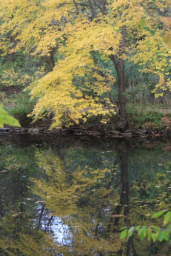 fall leaves yellow canal