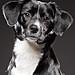 My Dog Java by ryanallan.com