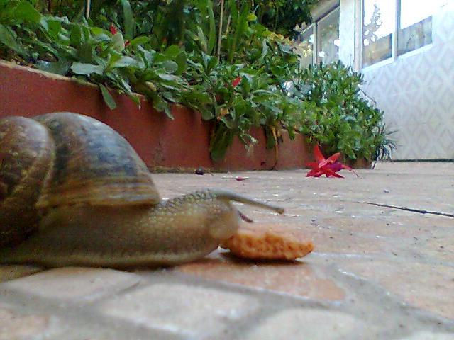 Los caracoles comen comida de perro flickr photo sharing for Caracol de jardin alimentacion