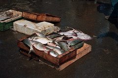 Essaouira Fish Market, Morocco 2006