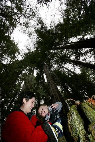rachel & sequoia under the heritage grove redwoods    MG 7896