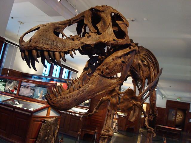 2183234305 acf164cf44 z jpgTyrannosaurus Skeleton In Museum