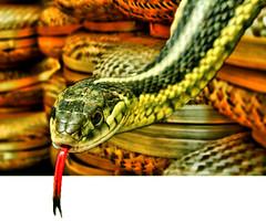 Snake Baskets